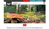 Quiz : testez vos connaissances sur les champignons !